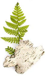 fern and bark